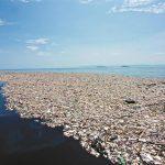 ilha de plástico do pacífico