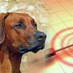 Os animais conseguem prever terremotos?